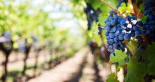 casa relvas exportação de vinho português produção de vinho