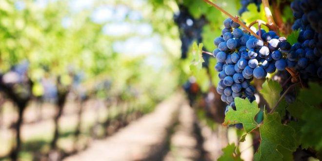 exportação de vinho português produção de vinho