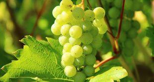 vinho branco pme magazine