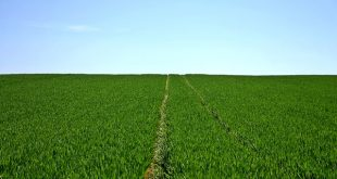 projetos agrícolas atividade agrícola agricultura pme magazine