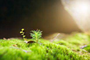 proteger a floresta pme magazine
