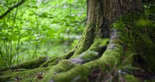 floresta raízes pme magazine