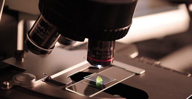 biotecnologia investigação pme magazine