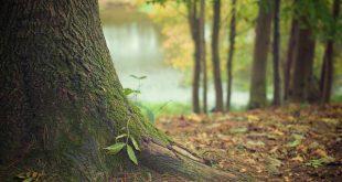 floresta plantar árvores pme magazine