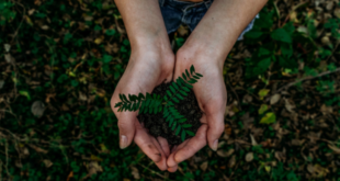 EDP ambiente sustentabilidade natureza responsabilidade ambiental Digital with Purpose Movement