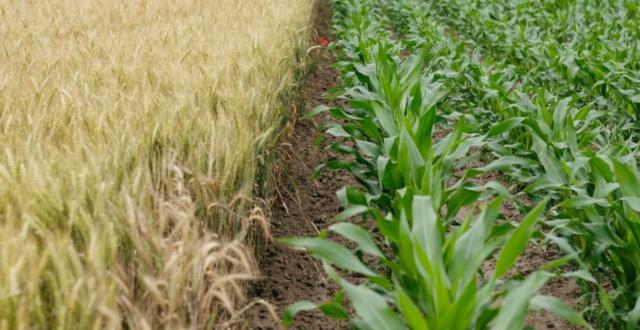 rede de Aceleração e Inovação Agrícola ambiente terreno agrícola leiria startup Leiria