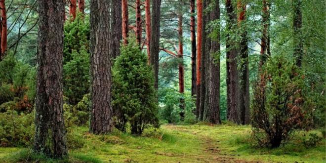 Fundo ambiental Condomínio de Aldeia ambiente aldeias território florestal Ministério do Ambiente e da Transição Energética