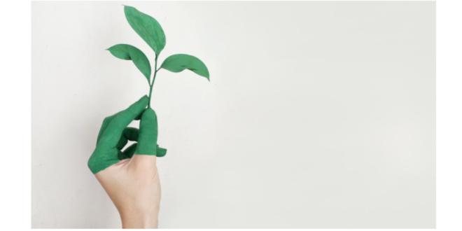 sustentabilidade ONU Plataforma ODSlocal municípios ODS 17 Objetivos de Desenvolvimento Sustentável Organização das Nações Unidas ambiente planta