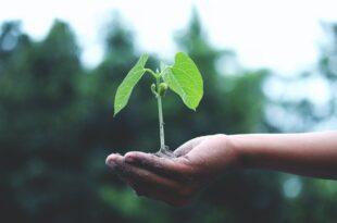 ERP Portugal – Entidade de Resíduos de Equipamentos Elétricos, Eletrónicos, Pilhas e Acumuladores Novo Verde Parceiro Sustentável ambiente sustentabilidade empresas